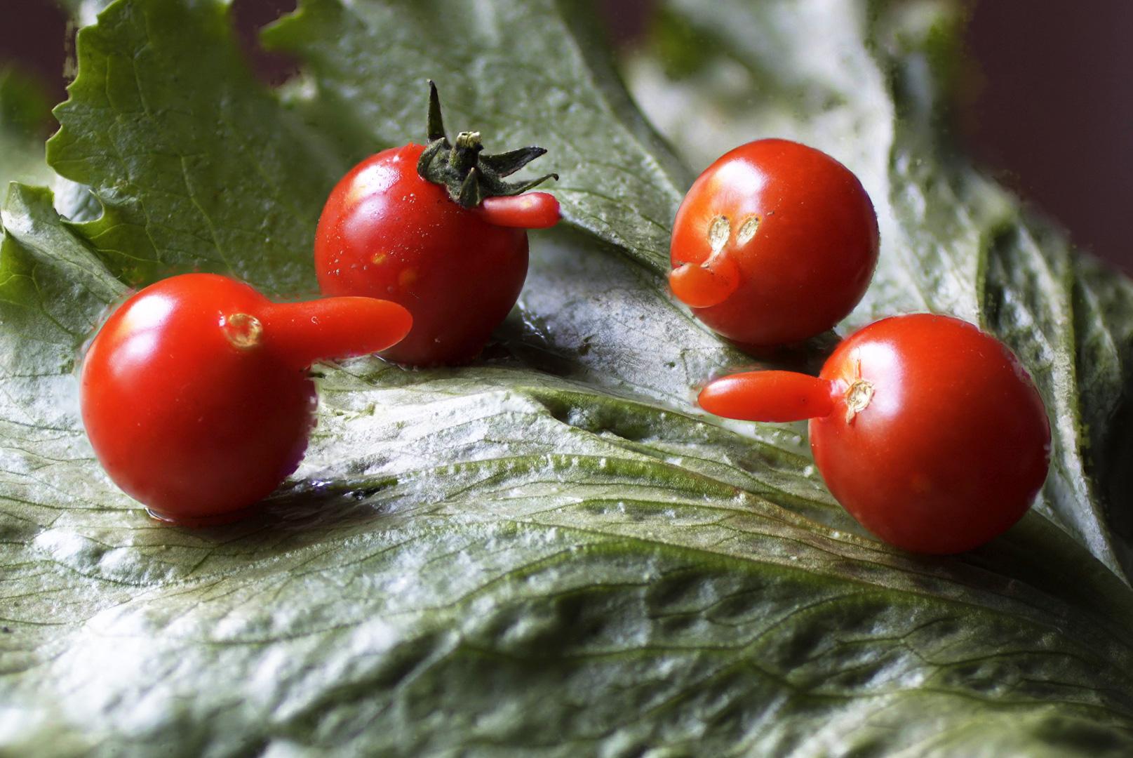 tomaatit_HD.jpg